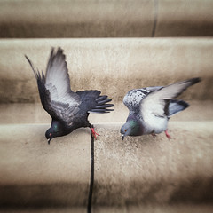 3248 (Elke Kulhawy) Tags: lensbaby color kunst art verschwommen cologne city tauben vögel