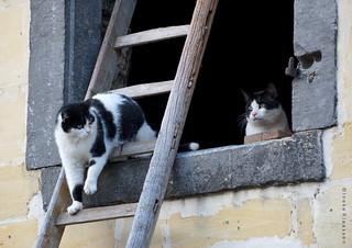 Farmcats