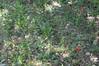 Ψίνθος (Psinthos.Net) Tags: ψίνθοσ psinthos nature φύση εξοχή countryside χωράφι field laoutari laoutariarea laoutaripsinthos λαουτάρι λαουτάριψίνθου περιοχήλαουτάρι λαγουτάρι lagoutari lagoutariarea greens χόρτα άγριαλουλούδια αγριολούλουδα wildflowers flowers λουλούδια φώσ light φώσήλιου φώσηλίου sunlight stones πέτρεσ poppies παπαρούνεσ κόκκιναλουλούδια redflowers redblossoms blossoms άνθ κόκκιναάνθη soil έδαφοσ χώμα ground πέταλα spring may άνοιξη μάιοσ μάησ