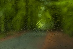 Forest Road Rain (leppre) Tags: rain raindrops water wet forest muff lisnagraforest donegal inishowen ireland green