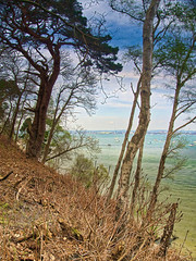 BrownseaIslandNo9-HiSat - Copy (iankellybn26dj) Tags: uk england photo dorset trees woodland forest island spring color colour light landscape