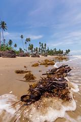 A Touch of Salt (miTsu-llaneous) Tags: beach water caribbean coconut seaweed sargassum island seascape nature beachscenes nikon d5200 tokina low perspective splash landscape