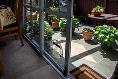 Pot Plants (Jocey K) Tags: newzealand nikond750 southisland christchurch building house garden pots potplants door