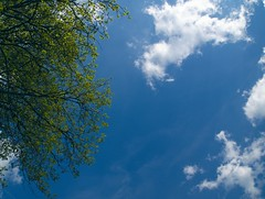 Branches d'arbre et ciel bleu I (Damien Delurier) Tags: branches ciel nuage bleu luminosité évasion