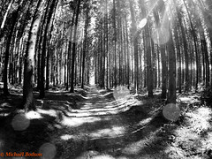 GOPR3086.jpg (bodsi) Tags: bodsi gopro promenade sun soleil foret tesa jackrussel