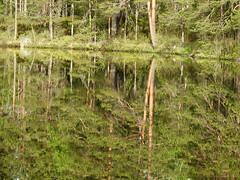 Lake Iso Majaslampi (Nuuksio national park, Espoo, 20180520) (RainoL) Tags: crainolampinen 2018 201805 20180520 esbo espoo finland geo:lat=6031968700 geo:lon=2459457000 geotagged isomajaslampi lake landscape may mirrorcalm nouxnationalpark nuuksionationalpark nuuksionkansallispuisto nyland p900 reflection spring uusimaa waterscape velskola vällskog fin