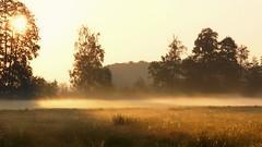 *** (pszcz9) Tags: przyroda nature natura baryczvalley dolinabaryczy wschódsłońca sunrise mgła fog mist łąka meadow drzewo tree słońce sun pejzaż landscape beautifulearth sony a77 polska poland