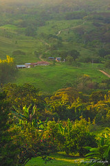 The Valley of Vado Real Before Sunset (Sound Quality) Tags: santander colombia americalatina latinamerica southamerica nature naturaleza vadoreal valley valle green field campo elcampo mountains montañas view vista buenavista canon canon50d travel viaje culture landscape mountain forest tree grass path