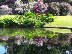 Parc de la Vallée aux Loups (Chatenay Malabri, Hauts-de-Seine, France) (frecari) Tags: hautsdeseine france 2018 printemps fleurs flowers spring parc jardin garden