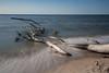 Strandgut (jmwill2005) Tags: baum strandgut bäume ostsee darss fischland nationalpark vorpommersche boddenlandschaft mecklenburgvorpommern ahrenshoop prerow zingst langzeitbelichtung lee filter little stopper