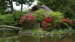 Azalea Pond /  Kyoto Umenomiya Taisha (maco-nonch★R) Tags: japanischer japanesephotographer japon japonés japan japanese japón shrine 梅宮大社 kioto kyoto azalea bird water teahouse teaceremony 日本 jardín