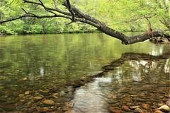 RIO JERTE (Deniel T) Tags: rio river jerte valle agua arbol