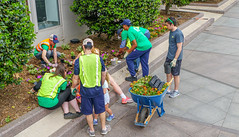 2018.05.06 Vermont Avenue, NW Garden - Work Party, Washington, DC USA 01791