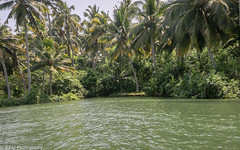 Green and Green  - Explored (Balaji Photography - 5 M views and Growing) Tags: gogreen poo kerala poovar canon green arabiansea travel tourism boating trees ecology ecofriendly
