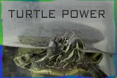 turtle power 4 jamieJo (zawaski) Tags: alberta beauty canada canmore farmboy noflash zawaski©2018 rockymountains naturallight calgary love ambientlight montee canonef2035mmf3545usm
