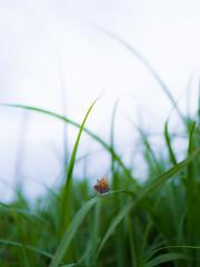 PhoTones Works #10309 (TAKUMA KIMURA) Tags: photones takuma kimura 木村 琢磨 風景 景色 自然 landscape nature snap 蝶々 蝶 チョウチョ butterfly 木村琢磨