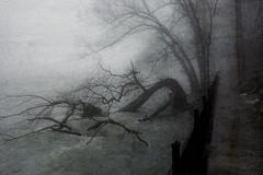 Entanglement (delmarvajim) Tags: digitalart digitalprocessing digitaleffect fineart fog mist trees walkway river water