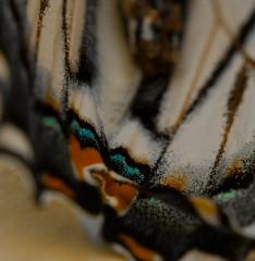 Butterfly-3 (Paul Broderick) Tags: butterfly lightroom nikond90 macro