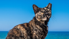 Protaras, Cyprus, 2018. (CWhatPhotos) Tags: cwhatphotos 2018 april cat feline pussy raggy ears ear torn blue water sky skies digital camera pictures picture image images photo photos foto fotos that have which contain olympus seafront golden coast beach holiday sea deep color colour 43 micro four thirds penf protaras cyprus eastern