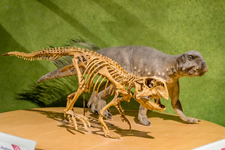 Crikey Carl, how can ya stand wearin' all that skin in this heat? (Psittacosaurus meileyingensis)