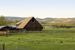 Barn near Richland, Oregon (icetsarina) Tags: old barn wooden oregon eastern topf505074faves