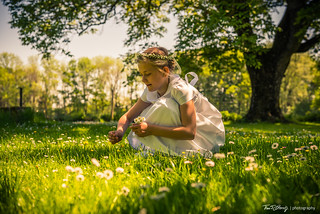 Picking daisies in a meadow