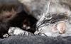 Relaxing cats (Marjan van de Pol) Tags: 5dmarkiv canon5d dordrecht gayla grace katten