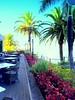 Madeira, Portugal. Funchal, The Cliff Bay Hotel (dimaruss34) Tags: newyork brooklyn dmitriyfomenko image sky clouds portugal madeira svetlanafomenko funchal hotel flowers lamppost palmtree palmtrees