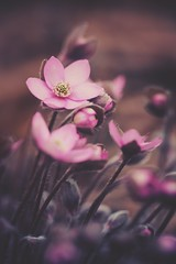 flower power (christian mu) Tags: flowers bokeh nature germany muenster münster botanicalgarden botanischergarten schlossgarten 9028g 9028 90mm macro sony sonya7riii sonya7rm3 spring christianmu