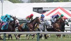 2018 Pimlico Race track (43) (maskirovka77) Tags: pimlico dirt mare race racehorse threeyearold turf yearling
