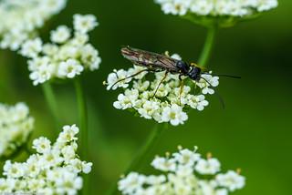 Beautiful bug