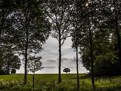 Twickel Landscape (Fred Veenkamp) Tags: coulissenlandschap boom bomen tree trees overijssel twickel landschap landscape