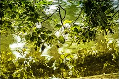 at the water's edge (TheOtherPerspective78) Tags: water pond lake reflection reflections mirror mirrorimage tree leaves green flora greenery stadtpark vienna park surface revuenon tele vintage vintagelens manualfocus manual theotherperspective78 canon eosm6