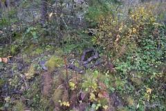 DSC_6777 (PorkkalaSotilastukikohta1944-1956) Tags: abandoned hylätty degerby suomi finland soviet porkkala porkkalanparenteesi