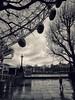 Those Moody London Days... (The Phoenix Girl) Tags: moody london uk england greatbritain unitedkingdom city londoneye cityscape southbank landmark westminster cityofwestminster bnw monochrome blackandwhitephotography photography timeoutlondon londoner londonist europe composition dark view trees urban nikon street
