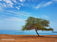Alone (dawey [Mohammad Alhmaid]) Tags: daweyq8 2018 beach clouds dhadna fujairah outdoor photography samsunggalaxys7edge sea sky travel tree unitedarabemirates water