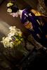 Maiko_20180305_11_24 (Maiko & Geiko) Tags: 20180305 hyakumanben chionji temple fukuno kyoto maiko 舞妓 ふく乃 京都 宮川町 河よ志 miyagawacho kawayoshi 百萬遍知恩寺 gaap