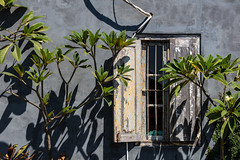 A little afternoon sun (A Different Perspective) Tags: bali airconditioner bali365 frangipani green shadow shutter tree wall window wire