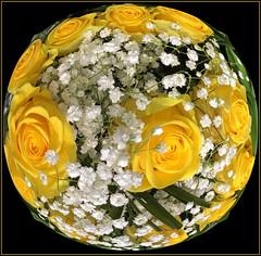 (Cliff Michaels) Tags: iphone8 photoshop pse9 flowers kroger