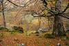 bosque Ason (rubenzmata) Tags: cantabria naturaleza norte bosque forest