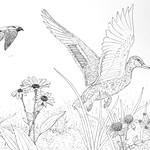 Meadow2 thumbnail