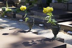 JEWISH CEMETERY (Eleonora Sala) Tags: ombra fiore cimitero tomba tombs giallo