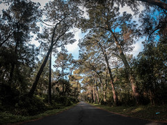 The Road (NCT.Hunter) Tags: jungle forest tree sky blue green road cloud gopro amazing wow hero 6 black nice beautifull