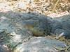 Baño de sol (ntnlsk) Tags: cocodrilo animal zoo nikon smile smiling