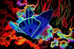 Blue Butterfly Of Peace (Mike Pesseackey (UAGUY1)) Tags: art digitalart butterfly color blazing conceptual nikon nikond7500 photoshop peace graphicart design alabama