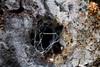 O (CarloAlessioCozzolino) Tags: cornatedadda legno wood albero tree buco hole ragnatela cobweb natura nature macro