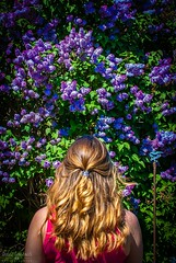 Flower wall (Fraser8888) Tags: back color colours purple long beauty beautiful flickr northamerica canada d60 nikon scents hair 35mm capture