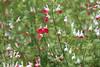 やさしい風をうけて (eyawlk60) Tags: gentle wind spring 初夏 春 花 優しい m6 eos canon