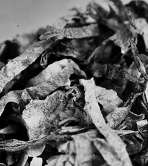 Tobacco macro (Charlotte P.Denoel) Tags: cigarette tobacco tabac detail grosplan closeup macro