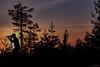 The Canon shooter (MIKAEL82KARLSSON) Tags: natur naturbild nature canon solnedgång sun sunset sommar summer sverige sweden dalarna bergslagen träd skog utsikt view tree siluett stativ pentax k70 sigma 70300mm mikael82karlsson explore explorer expo